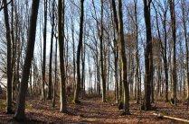 Frühling 2014 Bäume