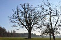 Frühling 2014 Baum