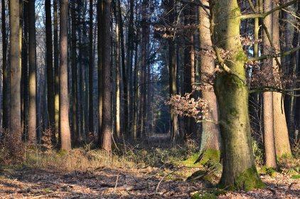 Frühling 2014 Wald