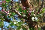 Fruehling in Forstinning 2015 _135
