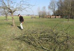 Baumschnitt für den Imkerverein