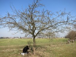 Ein Baum wurde nicht zugeschnitten um vergleichen zu können