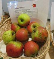 """Apfel """"Winterrambur"""" von Anna Adlberger"""