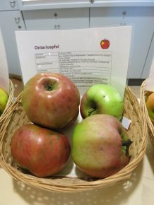 """Apfel """"Ontario"""" von Anna Adlberger"""
